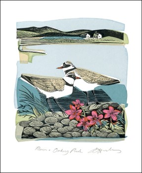 Plovers and Orkney Pinks