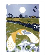 Barn Owl (Tweet of the Day)