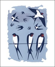Swallows (Tweet of the Day)