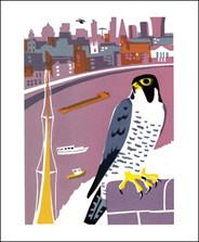 Peregrine Falcon (Tweet of the Day)