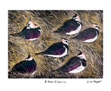 A Deceit of Lapwings