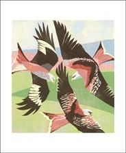 Red Kites, Laurieston