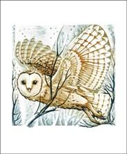 Barn Owl, Winter Branches