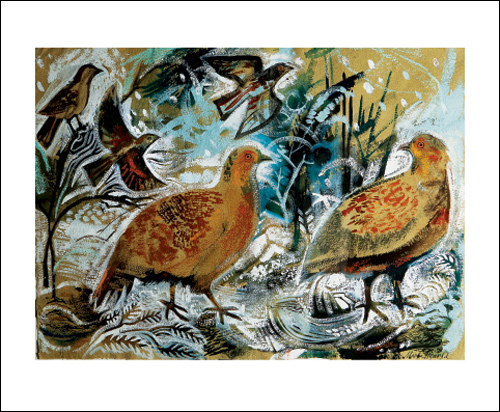 English Partridges