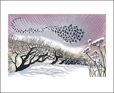 Mid Winter Starlings