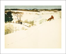 Fox in Winter NC1986X