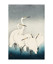 Herons In The Snow