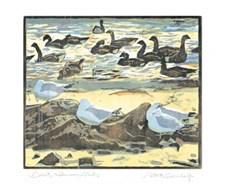 Brent & Common Gulls