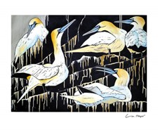 A Company of Gannets